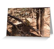 Common Squirrel Monkey, Gauteng, South Africa Greeting Card