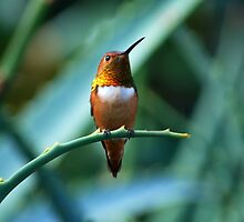 Hummingbird by saseoche