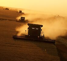 Harvest seen from the air by Lee Gunderson