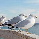 seagulls on the jetty by mattypaq
