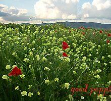 good poppies by calcidiscus