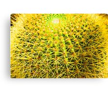 Psychedelic Golden Ball Barrel Cactus Spikes Close-up Canvas Print