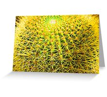 Psychedelic Golden Ball Barrel Cactus Spikes Close-up Greeting Card