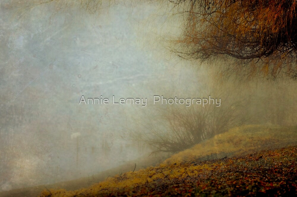 Trees of the Fraser by Annie Lemay  Photography