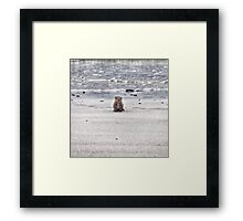 Young otter cub Framed Print