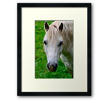 Beautiful White Horse Facing Towards the Camera Framed Print