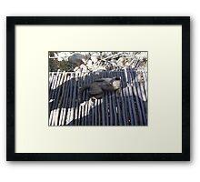 Capuchin Monkey 5, Gauteng, South Africa Framed Print