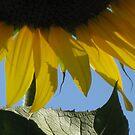 Sun Kissed by Arlene Zapata