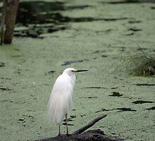 Healsville Santuary - Wetlands by Dean Osborne