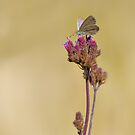 Little butterfly or moth on a flower by clearviewstock