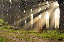 Morning Sunlight by clearviewstock