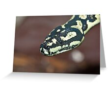 Yellow & Black Carpet Python - Morelia Spilota Cheynei Greeting Card