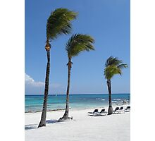 Tropical Swaying Palm Trees on White Sand Beach Scene Photographic Print