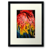 Beautiful Close-up of the Rainbow Coloured Feathers of a Scarlet Macaw Framed Print