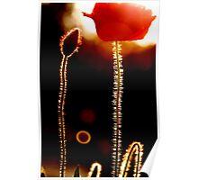 Dark Poppy Poster