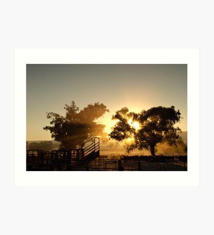 Cattle Sunrise 3 - Parkes, NSW Art Print
