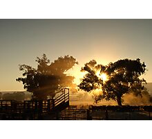 Cattle Sunrise 3 - Parkes, NSW Photographic Print