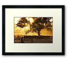 Cattle Sunrise - Parkes, NSW Framed Print