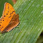 Bright orange butterfly on a leaf by clearviewstock