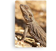 Central Bearded Dragon - Side View Canvas Print