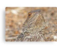 Central Bearded Dragon - Close up of face Canvas Print
