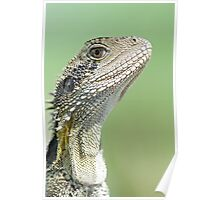 Closeup of Eastern Water Dragon Poster