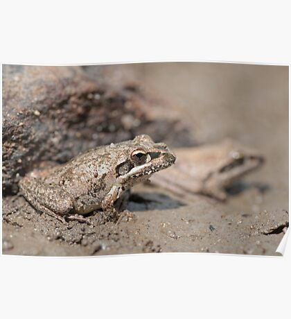 In Disguise - Frog Poster