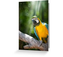 Young Blue & Gold Macaw (Ara ararauna) Greeting Card
