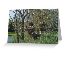 Highrise Bird Hotels Greeting Card