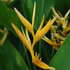 Yellow Heliconia Stems by clearviewstock