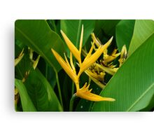 Heliconia Flowers Canvas Print