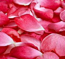 Roses in Love by clearviewstock