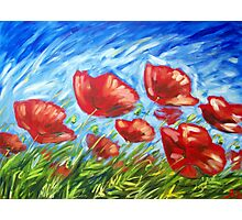 Poppy Summer Photographic Print
