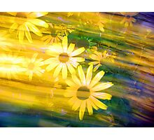 Sun Flower Rush Photographic Print