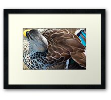 Close-up of Female Mallard Duck Showing Back and Tail Feather Details Framed Print