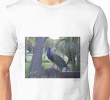 Semi-Wild Peacock 3, Gauteng, South Africa Unisex T-Shirt