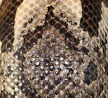 Snake Skin by AnnDixon