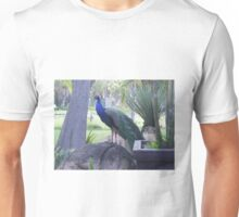 Semi-Wild Peacock 4, Gauteng, South Africa Unisex T-Shirt