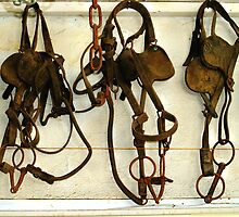 Bridles, Blinders & Bits ! by Jan Siemucha