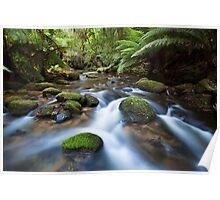 Rapids near St Columba Falls Poster