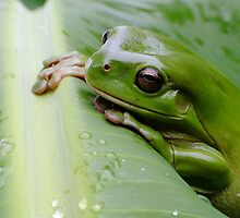 Frog Time Again! by Gabrielle  Lees
