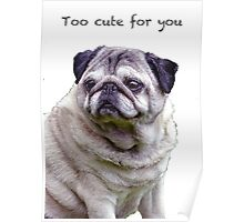 Too cute for you Pug Poster
