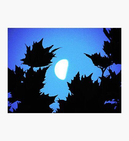 Vignette Photographic Print