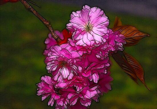 Cherry Blossom  (Spring) by Trevor Kersley