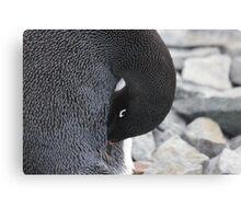 Adelie penguin Canvas Print