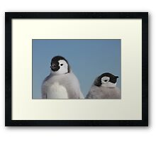 Emperor chicks Framed Print