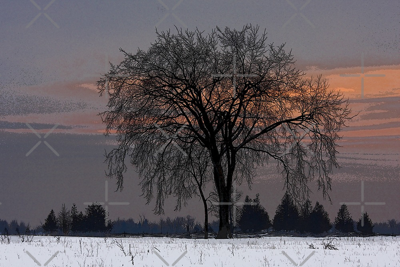 Waiting for Spring by Jim Cumming