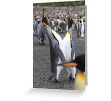 King penguins courting Greeting Card