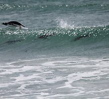 Gentoo penguins surfing by Marion Joncheres
