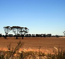 Wheatbelt colours in Summer by shazart